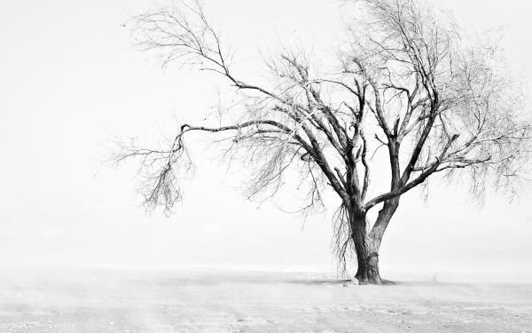 Arbol-solitario-con-nieve